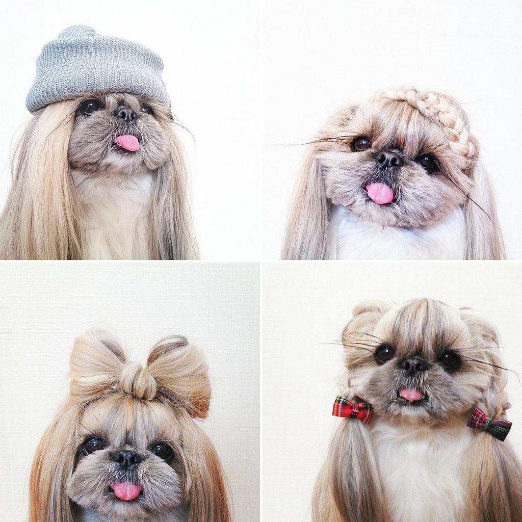 Kuma,la cagnolina stylish star melania migliozzi
