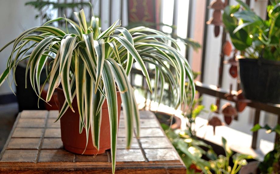 10 piante da appartamento che purificano l aria - Piante da casa che purificano l aria ...