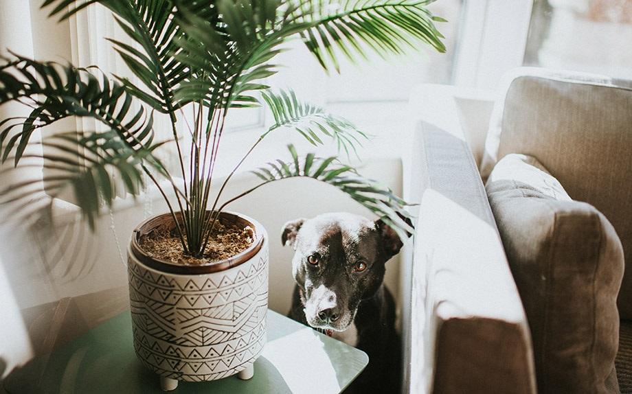 Le piante da appartamento pet friendly glamour.it