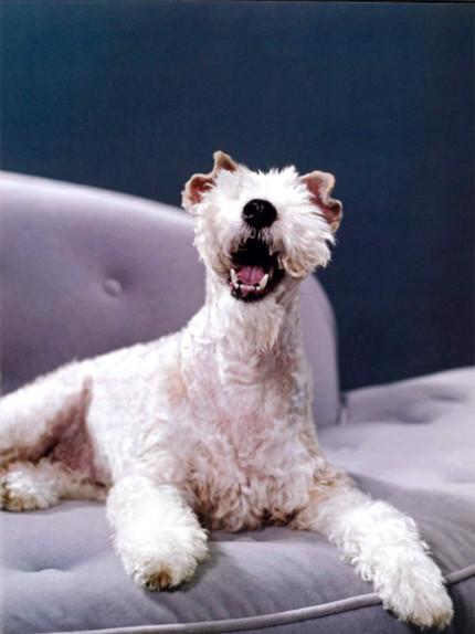 Vita da cani: occhio non vede, cuore non duole