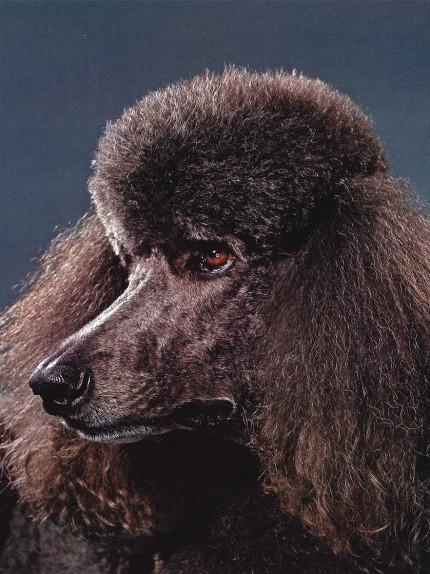 Vita da cani: segui il tuo umore nero