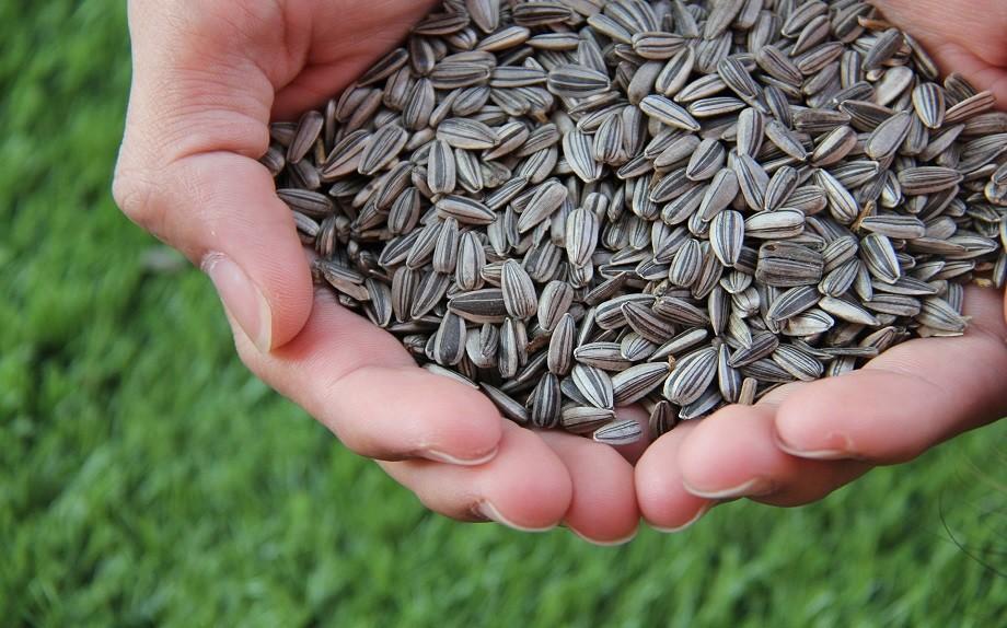 i semi