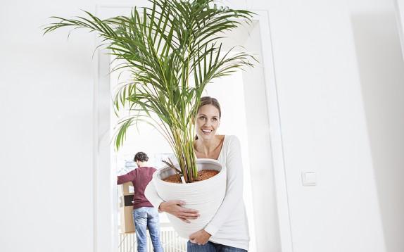10 piante da appartamento che purificano l'aria