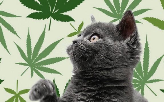 La cannabis terapeutica? Anche per i pet. Ma a certe condizioni...