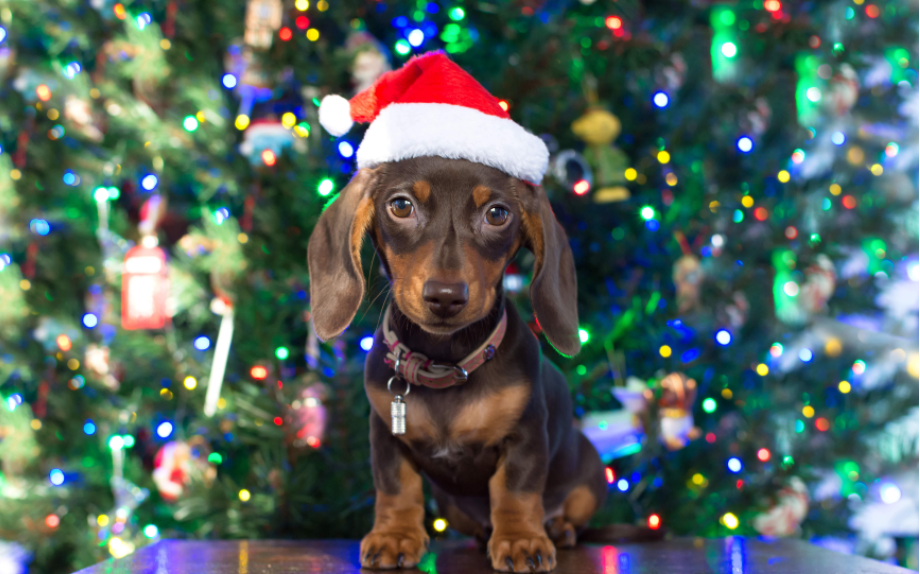 GettyImages-882191062 cani gatti natale